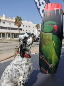 parrot-dog